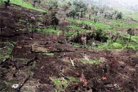 Bosque-quemado-en-Kenia