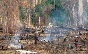 deforestación en la Amazonía zona de monte quemada