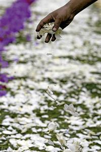persona depositando pétalos de flores en el suelo