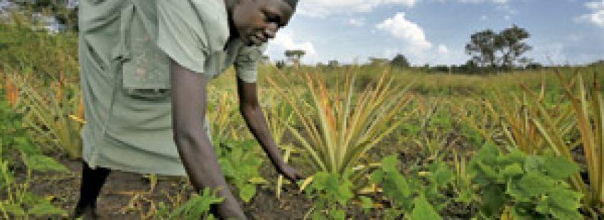 mujer africana agricultora cultivando alimentos en la tierra