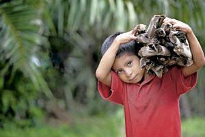 niño en Honduras transporta un atillo de leña