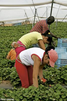 temporeros trabajadores inmigrantes en el campo