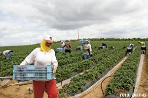 temporeros trabajadores inmigrantes en la fresa