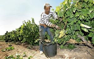 temporeros trabajadores inmigrantes en la vendimia
