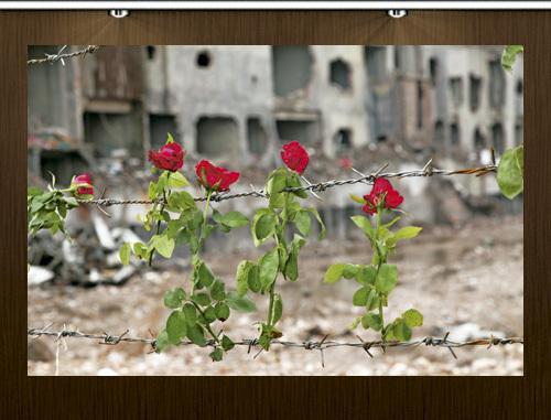 rosas en Bangladesh