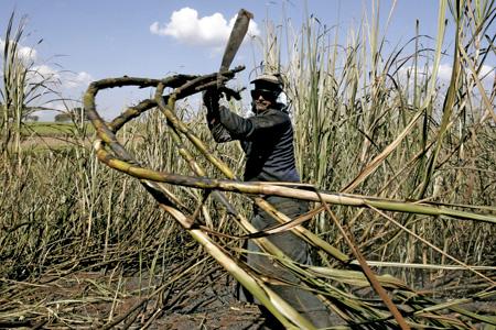 hombre campesino en Brasil