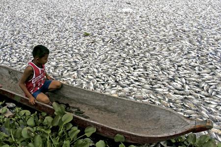 niño en una canoa en un mar de peces muertos