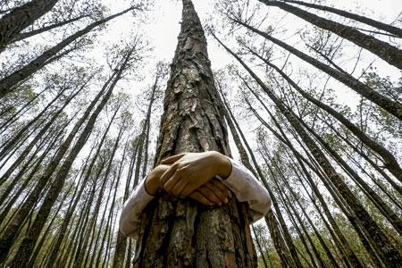 ecología persona abrazando un árbol