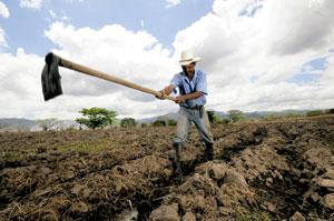 hombre arando la tierra campesino agricultor
