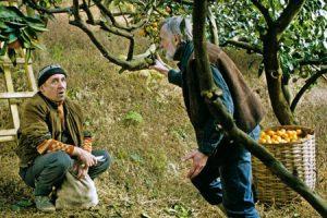 Fotograma de 'Mandarinas'