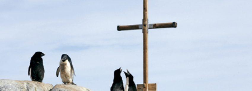 pingüinos entre las rocas al lado de un crucifijo