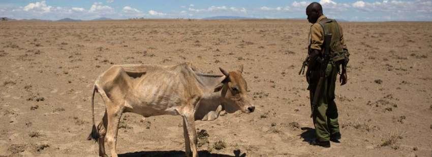 sequía Kenia crisis humanitaria vaca desnutrida a lado de un soldado tierra seca mayo 2017