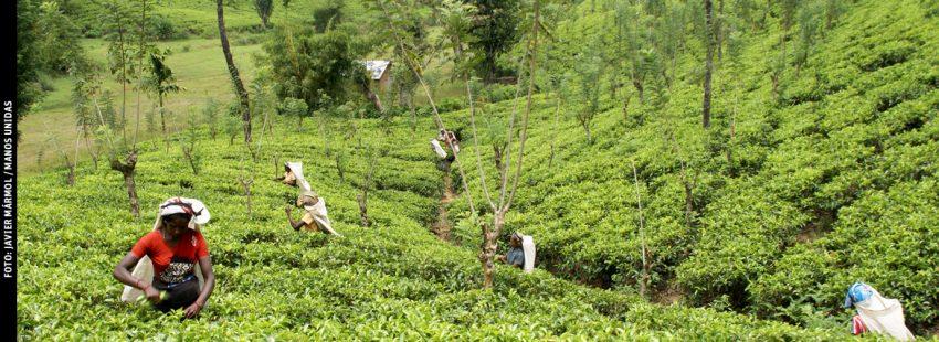 mujeres en Sri Lanka en un proyecto agrícola de Manos Unidas