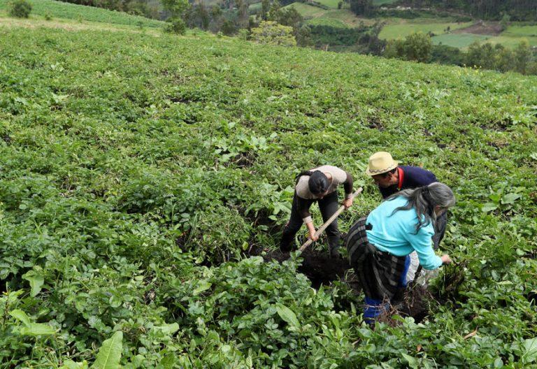 Un grupo de campesinos colombianos cultiva sin materiales químicos en una apuesta por la agricultura ecológica
