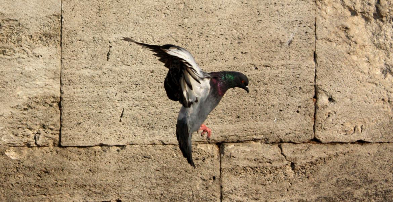 Una paloma alza el vuelo en pentecostés