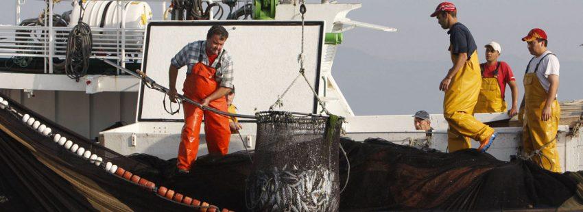 Pescadores de sardina en O Grove