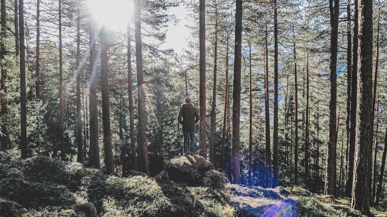 persona en bosque