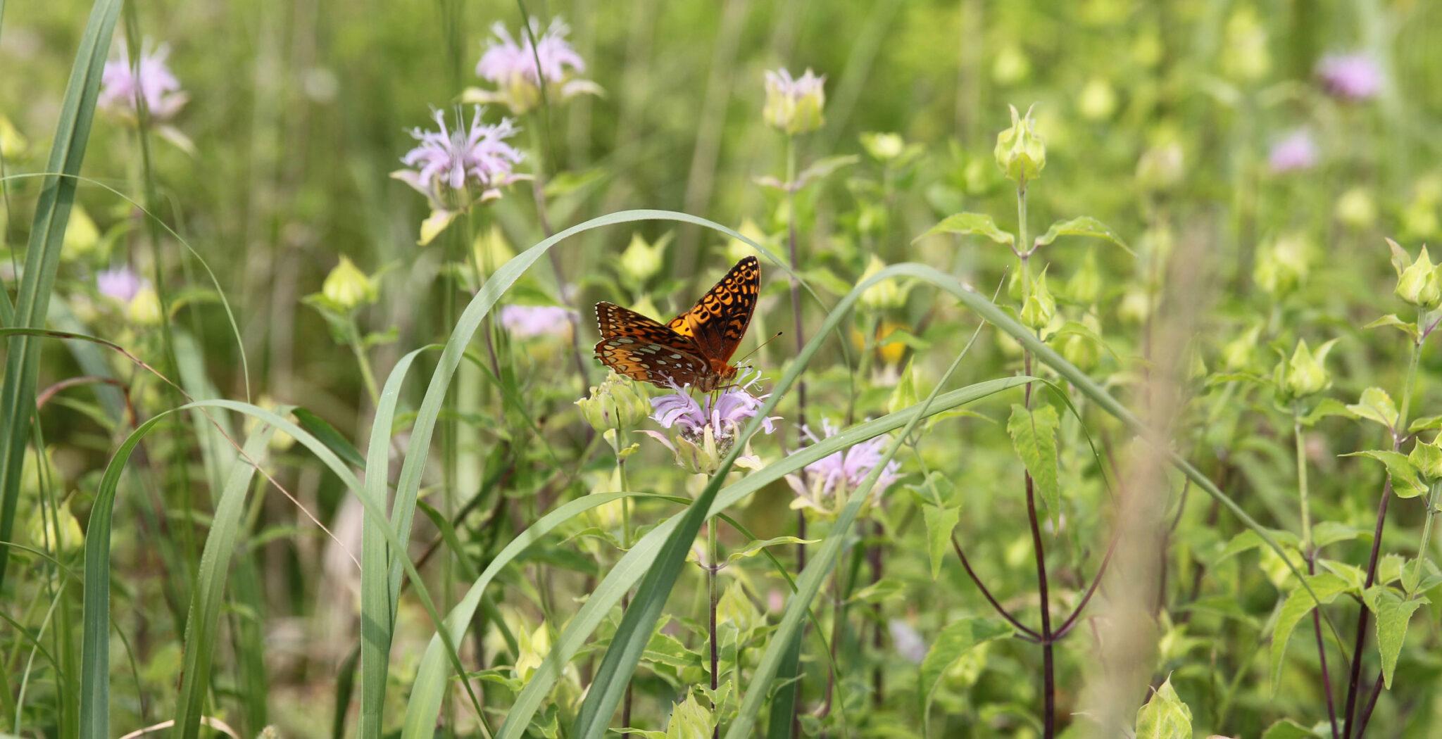 naturaleza, plantas, mariposa