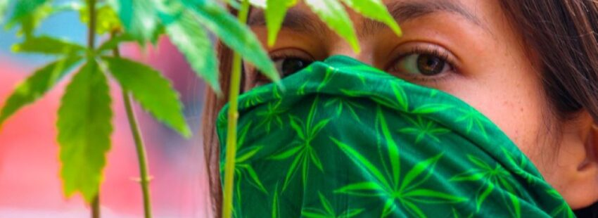 uso lúdico marihuana