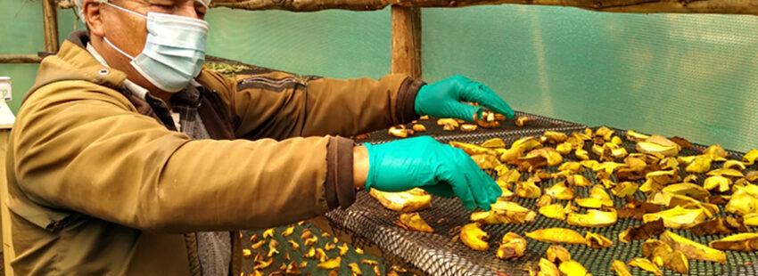 El proyecto de Cáritas del Perú ha mejorado los ingresos de las familias productoras de hongos