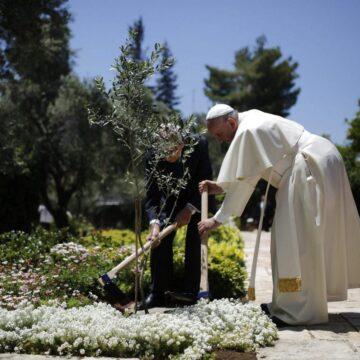 Papa árbol Israel