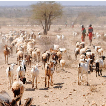 Pastores samburu de Kenia